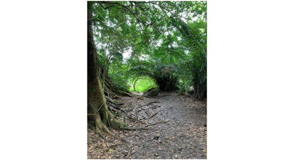 在森林裡走著,感覺自己就像進入了《阿凡達》的世界。