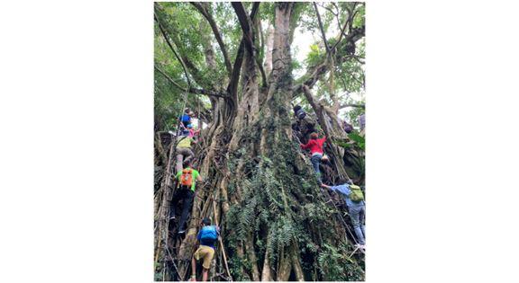 整個旅程的重頭戲——要沿著大樹爬上兩三層樓高的平台。