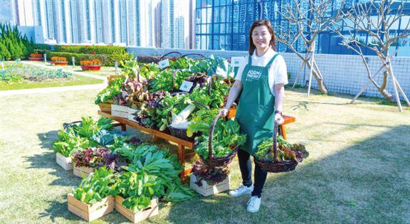 「一喜種田」項目有7個都市農莊於旗下物業運作,並亦與城市農業專家和非牟利組織合作,舉辦各類社區工作坊、活動及導賞團。
